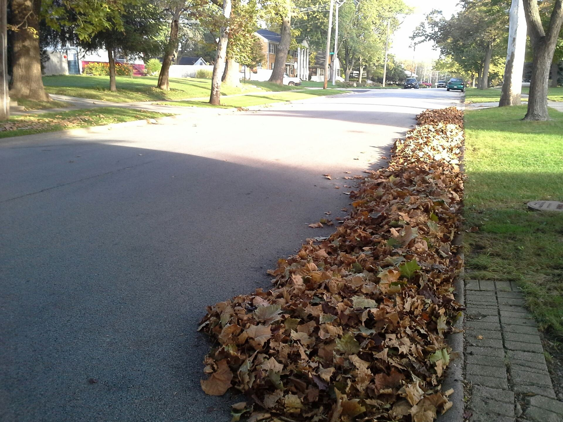 Photo - the INCORRECT WAY to rake leaves
